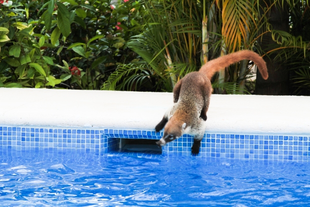 mexico vacation - coati - chic on sunday